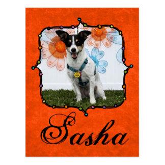 Sasha - Jack Russell Postal