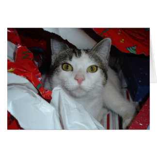 Sasha - mirando a escondidas en los presentes tarjeta de felicitación