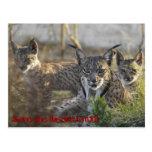 Save the Iberian Lynx!! 3 Postal