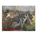 Save the Iberian Lynx!! 3 Tarjeta Postal