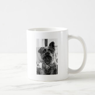 Schnauzer miniatura taza de café
