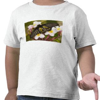 SE Asia, Tailandia, Khon Kaen, el de oro Camisetas