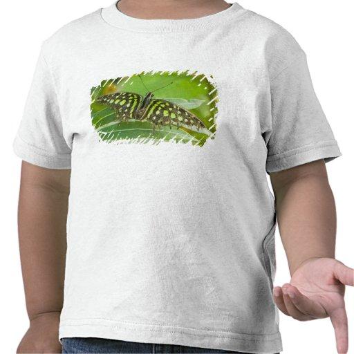 SE Asia, Tailandia, mariposa atada de Jay Camisetas