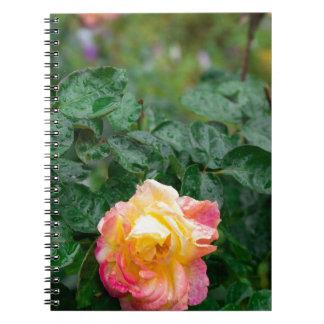 Se descolora color de rosa mojado con gotas de la cuaderno