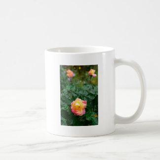 Se descolora color de rosa mojado con gotas de la taza de café