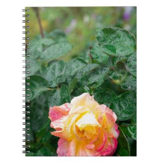 Se descolora el otoño mojado subió con la falta de cuaderno