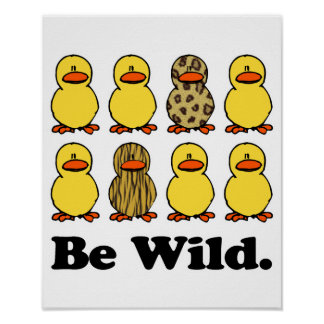 Sea patos salvajes póster