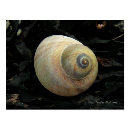 Seashell del caracol de mar de la luna, isla de postal