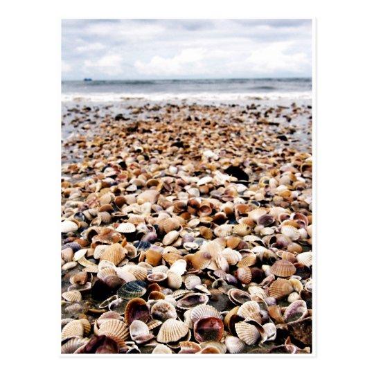 Seashells de Krabi Tailandia el | en la costa Postal