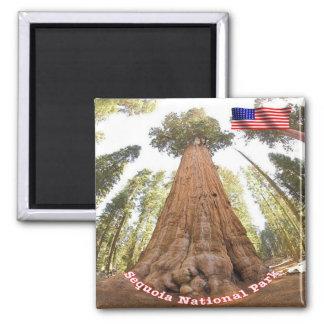 Secoya del parque nacional de los E.E.U.U. los Imanes