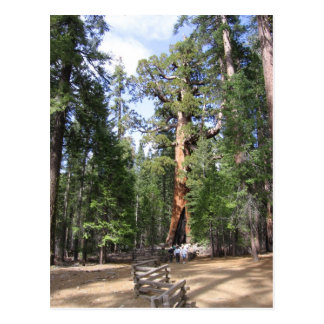 Secoya gigante, parque nacional de Yosemite Postal
