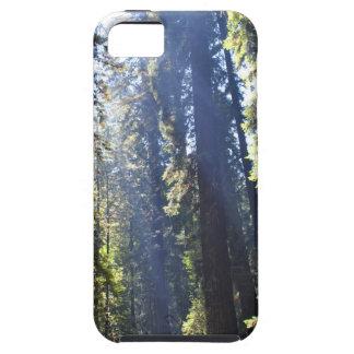 Secoyas de California Funda Para iPhone SE/5/5s