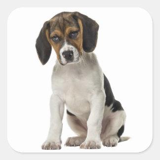 Sello canino del pegatina del perro de perrito del