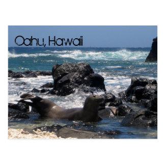Sello hawaiano del monje postal