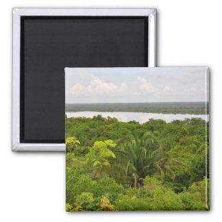 Selva tropical de America Central en Belice Imanes
