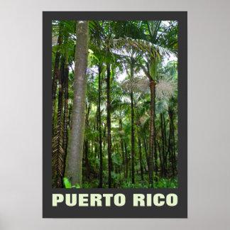 Selva tropical del EL Yunque de las plantas Póster