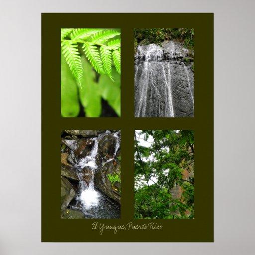 Selva tropical nacional del EL Yunque, Puerto Rico Impresiones