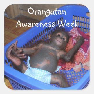 Semana de la conciencia del orangután pegatina cuadrada