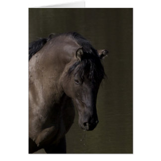 Semental en la tarjeta de felicitación del caballo