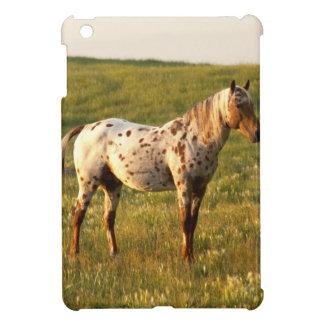 Semental manchado del caballo