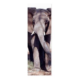 Señal del elefante tarjetas de visita mini