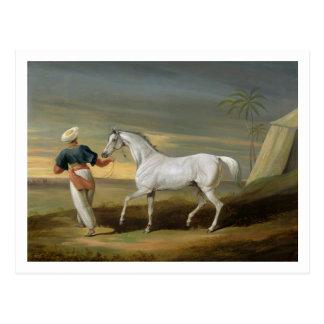 Señale, un árabe gris, con un novio en el desierto postal
