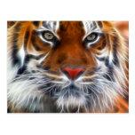 Señor de las selvas indias, el tigre de Bengala re Postales