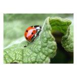 Señora Bug On A Leaf Invitacion Personal