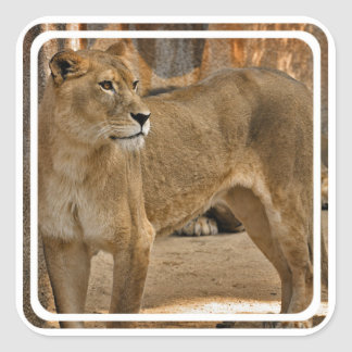 Señora Lioness Sticker Calcomanias Cuadradas