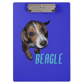 Sentada del perrito del beagle - fondo azul