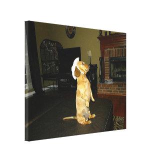 Sentar la lona bonita o de observación del Dachshu Lona Envuelta Para Galerias