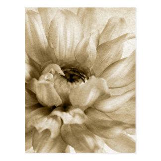Sepia blanca y fondo poner crema de la dalia modif postal