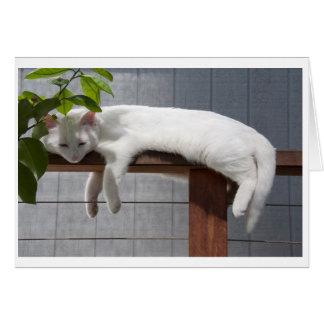 Serie cómica de la tarjeta en blanco del gatito