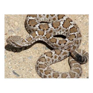Serpiente de cascabel negra de Juvenille Postal