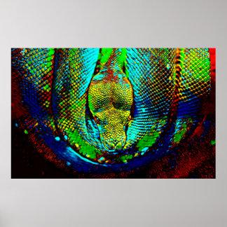 Serpiente del arco iris póster