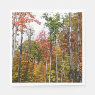 Servilletas De Papel Caída en la fotografía colorida del otoño del
