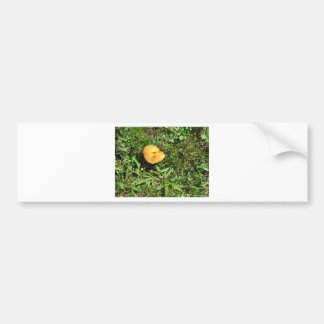 Seta amarilla en un prado verde pegatina para coche