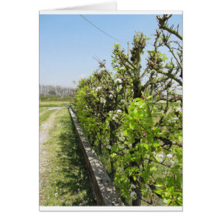 Seto verde de los manzanos de la pera y con el tarjeta de felicitación