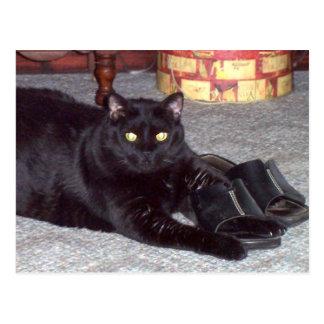 """""""Si el zapato cabe"""" la postal del gato"""