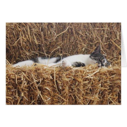 Siesta del gato de la tarde tarjeta de felicitación