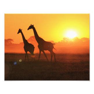 Silueta de la jirafa - funcionamiento de la foto