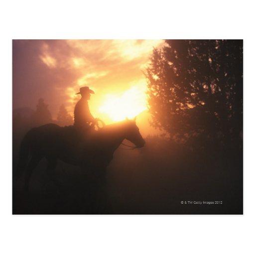 Silueta del vaquero en un caballo tarjetas postales