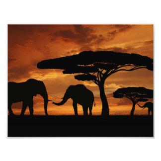 Siluetas de los elefantes africanos en puesta del impresiones fotográficas