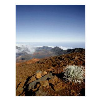Silversword en borde del cráter de Haleakala de Postal