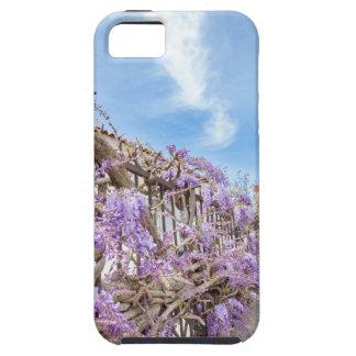 Sinensis azul floreciente de las glicinias en la funda para iPhone SE/5/5s
