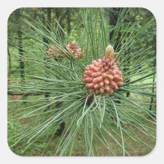 sistema del pegatina del cono del pino de 20