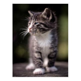 Situación del gatito y estrabismo postal
