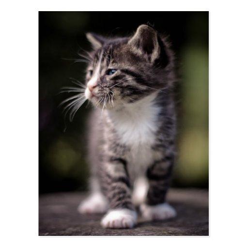 Situación del gatito y estrabismo tarjeta postal