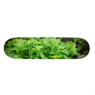 Skateboard Hojas Skateeboard