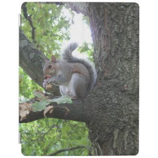 Smart Cover Para iPad Ardilla gris en un árbol que come una castaña